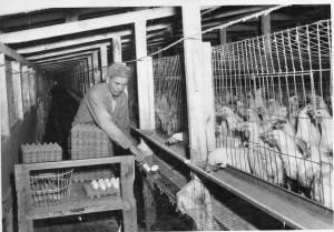 willamette egg company 1965